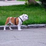 câine în parc